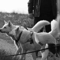 Sortie chiens libres - 19 Novembre 2017 (10)