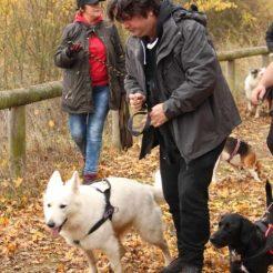 Sortie chiens libres - 19 Novembre 2017 (12)