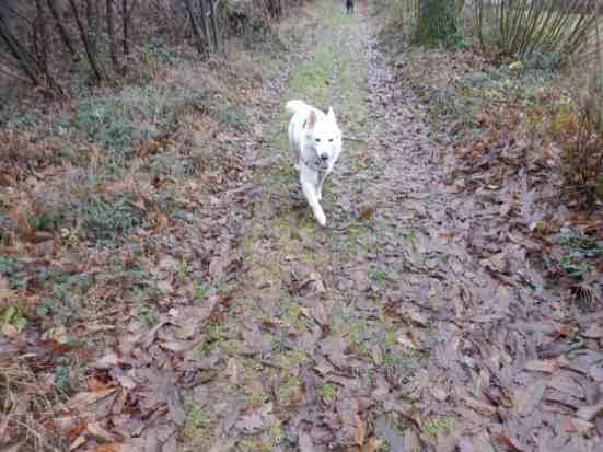 Sortie chiens libres - 17 Décembre 2017 (11)