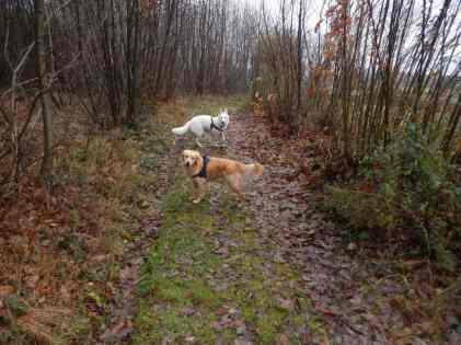 Sortie chiens libres - 17 Décembre 2017 (12)