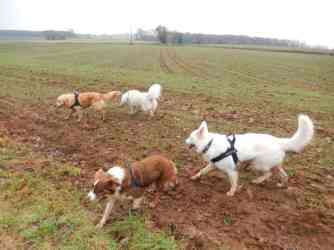 Sortie chiens libres - 17 Décembre 2017 (15)