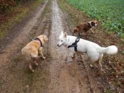 Sortie chiens libres - 17 Décembre 2017 (24)