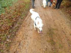 Sortie chiens libres - 17 Décembre 2017 (28)