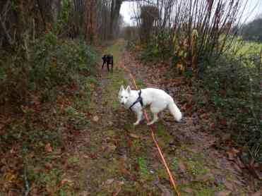 Sortie chiens libres - 17 Décembre 2017 (3)