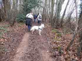 Sortie chiens libres - 17 Décembre 2017 (47)