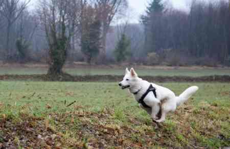 Sortie chiens libres - 17 Décembre 2017 (52)