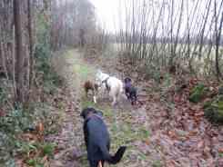 Sortie chiens libres - 17 Décembre 2017 (7)