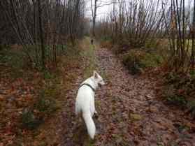 Sortie chiens libres - 17 Décembre 2017 (9)
