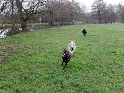 Sortie chiens libres - 28 Janvier 2018 (21)