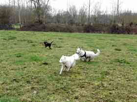 Sortie chiens libres - 28 Janvier 2018 (28)