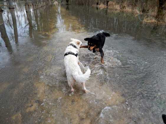 Sortie chiens libres - 28 Janvier 2018 (7)
