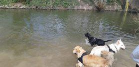 Sortie chiens libres - 25 Mars 2018 (18)