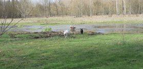 Sortie chiens libres - 25 Mars 2018 (31)