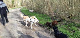Sortie chiens libres - 25 Mars 2018 (47)