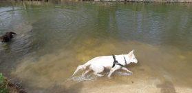 Sortie chiens libres - 25 Mars 2018 (50)