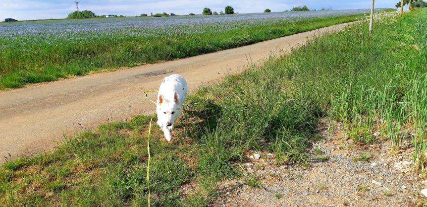 Promenade en Abs - 02 03 et 04-05-2018 (16)
