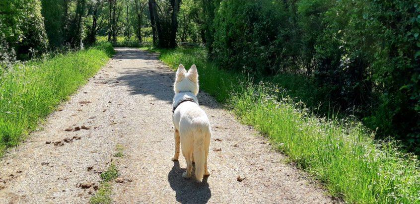 Promenade en Abs - 02 03 et 04-05-2018 (30)