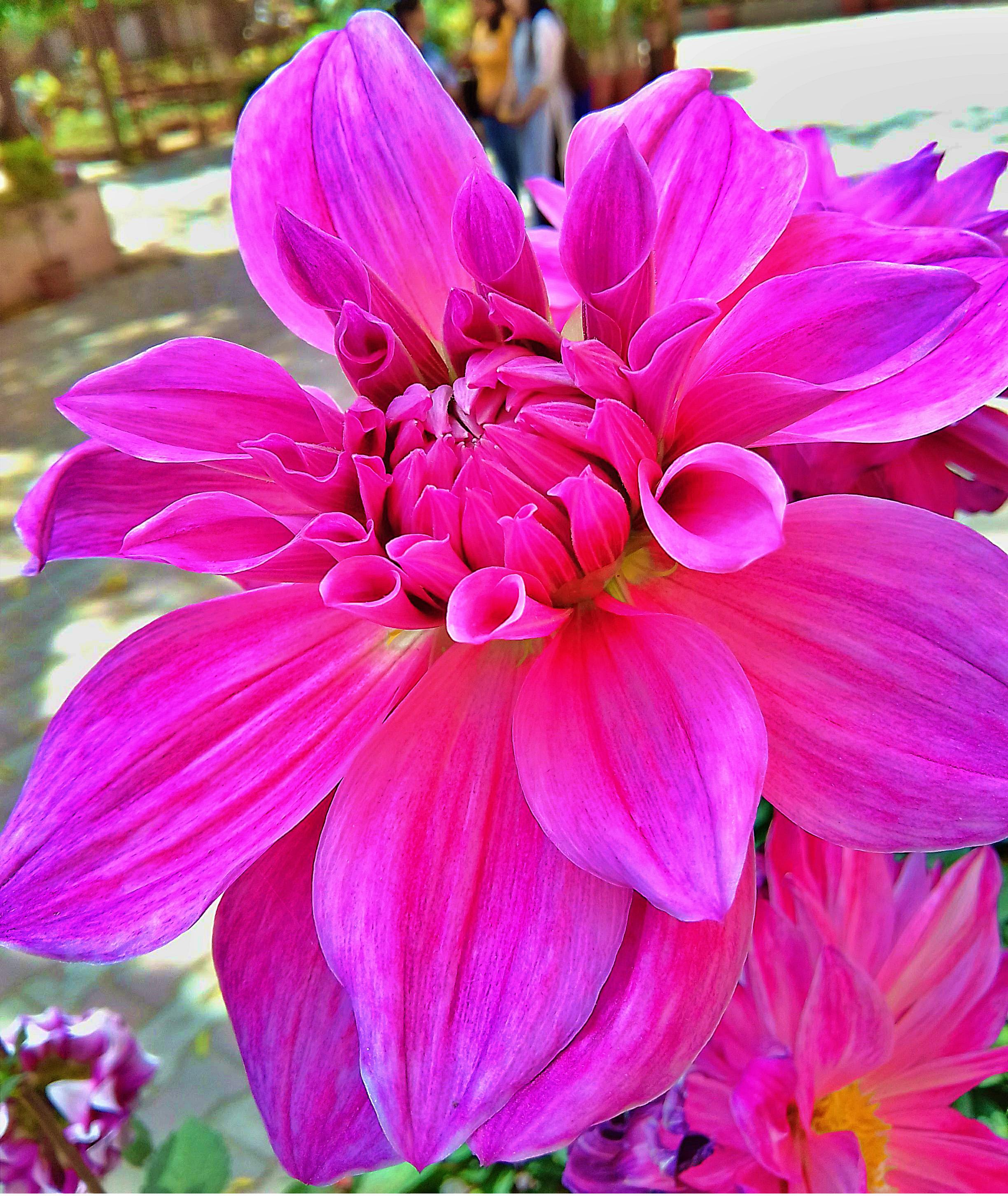 Beautiful Flower Hd Wallpapers Flowers Nsempire