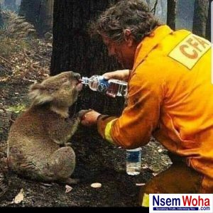 Australian firefighters help koala