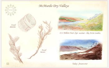 Bocetos de los fósiles.