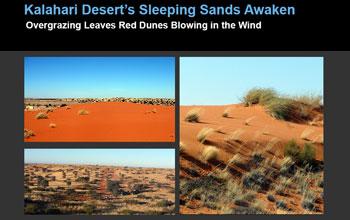 dunes and desert vegetation