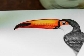 Drawing - Toucan