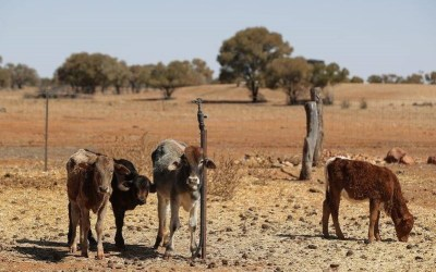 Labor Slammed By Nats MP Over Drought Doubts