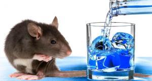 nti-news-Rats-drunks-9-lakhs-liquor-in-bihar