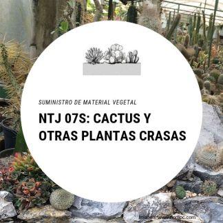 NTJ 07S Cactus y otras plantas crasas