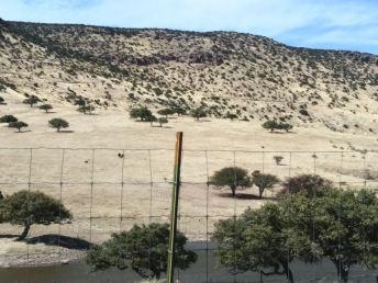 Ranchos-Balleza-15
