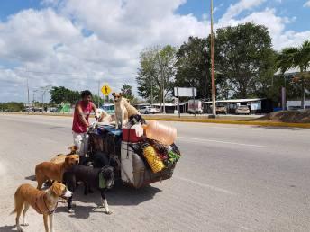 Nayarita viajero que apoya perritos callejeros1