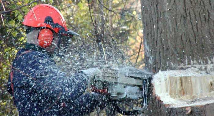 Vānē plāno izcirst bīstamos kokus