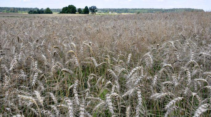 Pasaules Dabas fonds izsludina konkursu lauksaimniekiem
