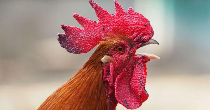 Mājputnu īpašniekiem un turētājiem putni jātur slēgtās telpās un jāievēro citi papildu biodrošības pasākumi