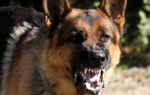 Kad no suņa jābaidās…