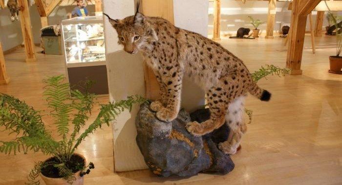 Kara muzejā atklās vērienīgu izstādi par medībām