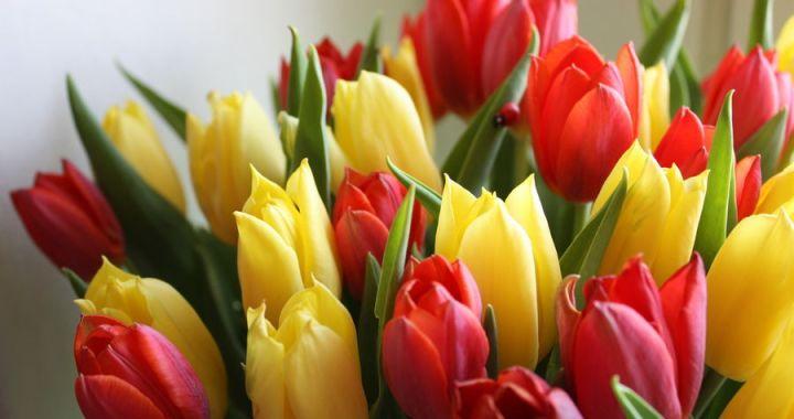 Vairums Latvijas sieviešu priecātos saņemt apsveikumus 8. martā