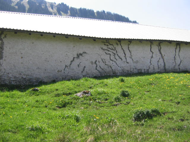 Abbildung 1: Absenkung (Subsidenz) unter dem zentralen Teil einer Alphütte am Hohberg (Kanton Freiburg). Die durch grauen Zement gefüllten Risse in der weissen Mauer sind auf die natürliche Subsidenz des Untergrundes zurückzuführen.