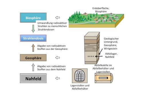 Abbildung 1: Grundmodell der Nagra mit Nahfeld, Geosphare und Biosphäre; Fluss der radioaktiven Substanzen vom Lager bis zum Ausdruck der durch den Menschen erhaltenen zusätzlichen Strahlendosis (Nagra 2014, Fig. 2-2, Figurenübersetzung Englisch-Deutsch)