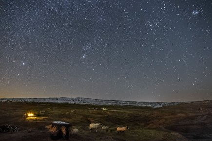 North Pennines AONB - Sheep under a starry sky