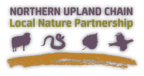 Logo for NUCLNP