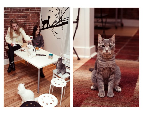 Grey Cat Cafe Montreal Girls Twins Bloggers