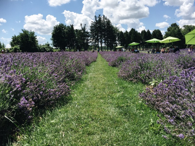 Maison Lavande Lavender Fields St Eustache Nudabite Summer Activities