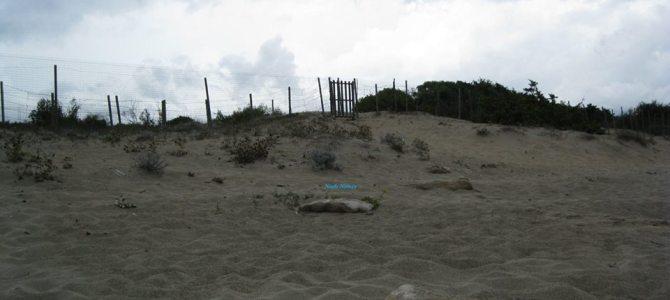 La mia prima spiaggia naturista