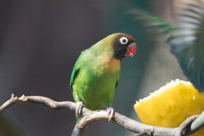 Vogel Zoom Erlebniswelt