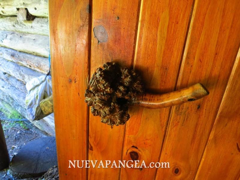 Picaporte creado con los nudos (callos?) que se crean en los árboles cuando los ataca el Llao Llao