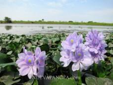 Flores del bañado