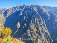 Cañón del Colca, Perú