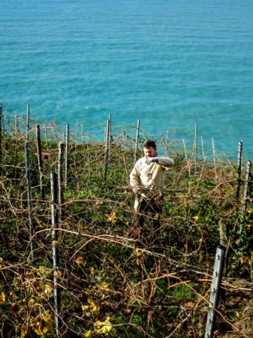 Los viniedos de Cinque Terre, intrínsecos a la historia del lugar.