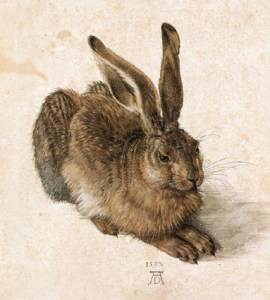 Photo of Durer's hare